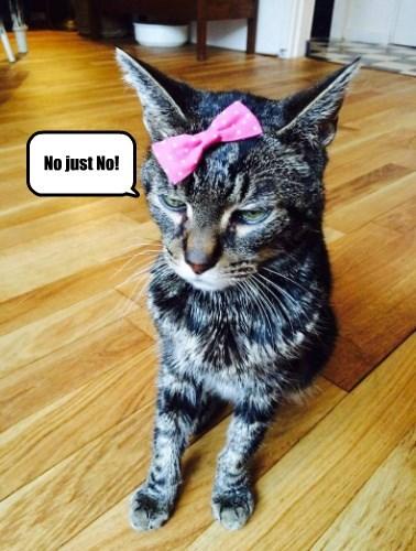 cat nope Stupid Human Tricks - 8754196992