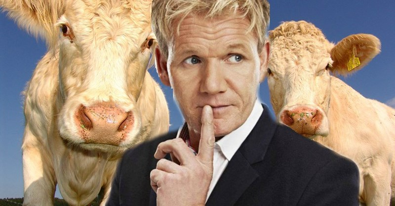 gordon ramsay twitter vegans Vegans Did Not Take Kindly to Gordon Ramsay's Joke on Twitter