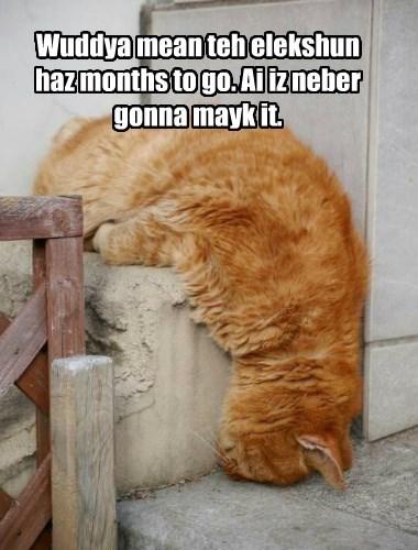 caption election Cats - 8754269696