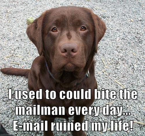 animals dogs mailman caption - 8754308352