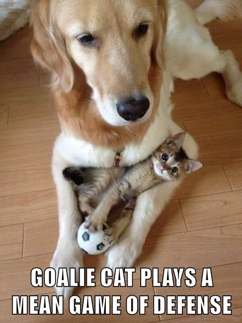 animals dogs soccer caption Cats - 8754320640