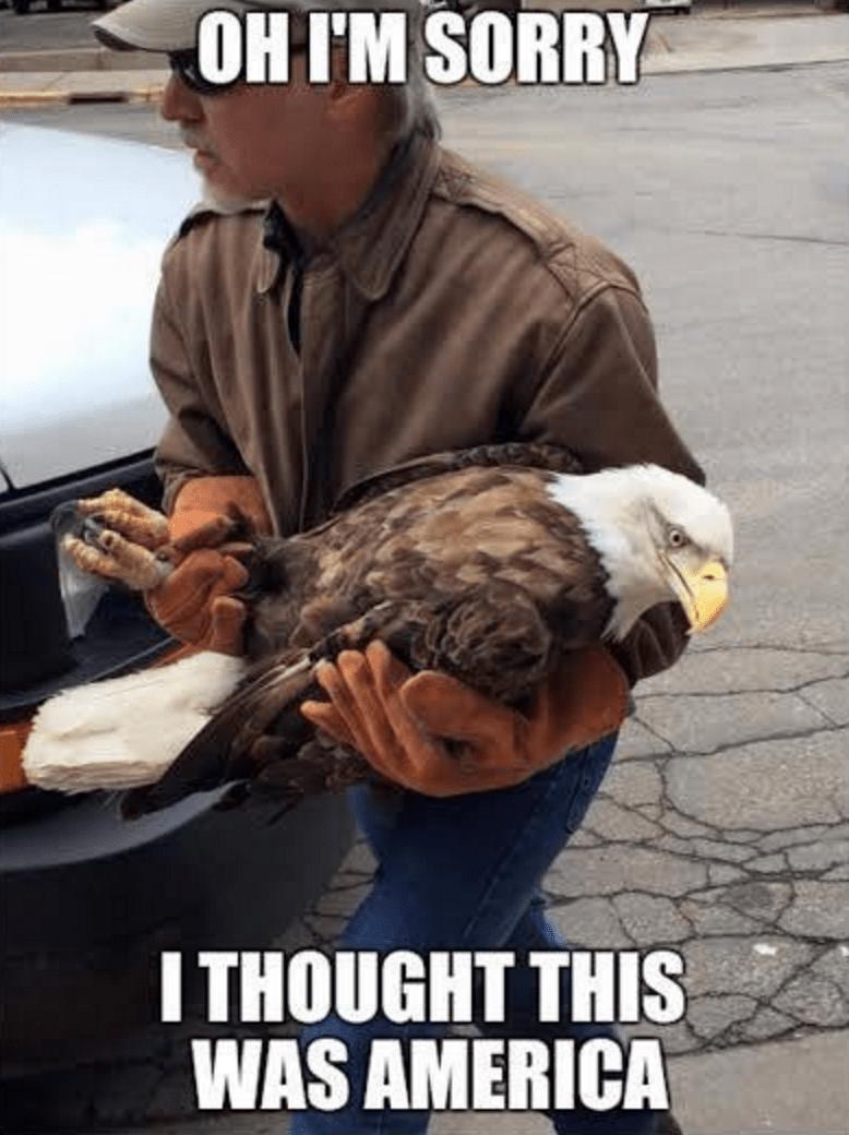 eagle america - 8754341120