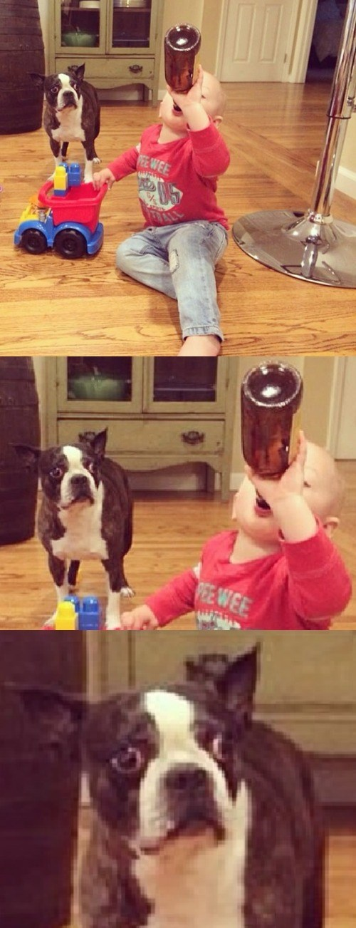 Babies drinking dogs - 8754343168
