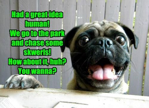 dogs caption great idea - 8754391040