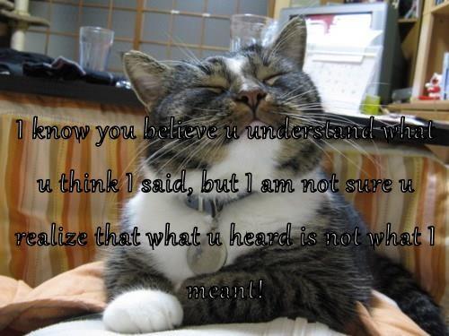 animals say what cat logic smug Cats - 8754450688