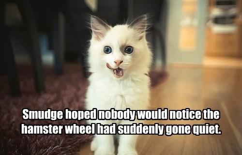 hamster caption Cats - 8754471424