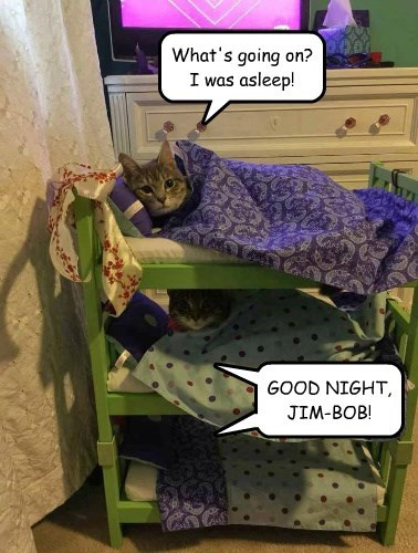 bunk beds good night remember Cats funny - 8754473728