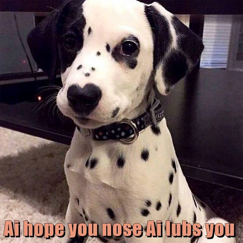 animals dogs puppy caption - 8754507776