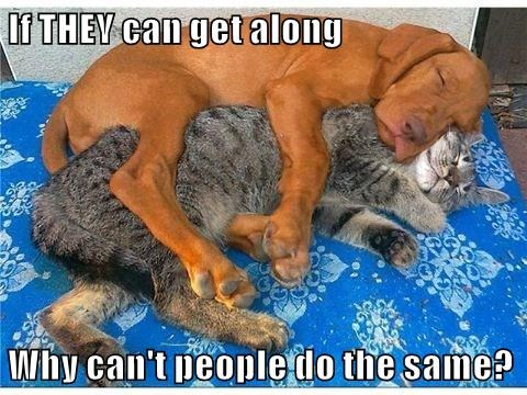 animals dogs caption Cats - 8754545408