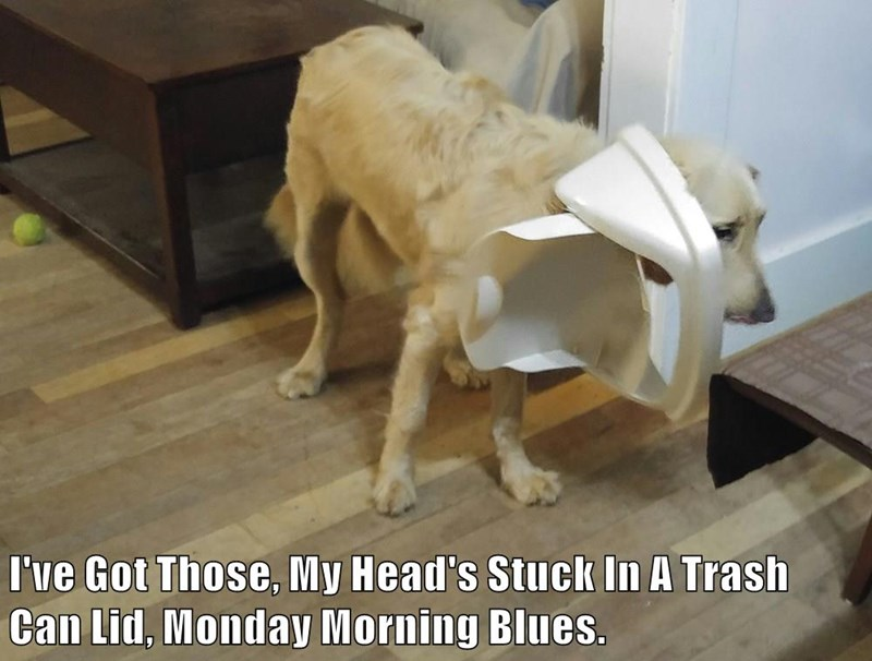 animals dogs trash Monday morning head stuck blues lid caption - 8754896896