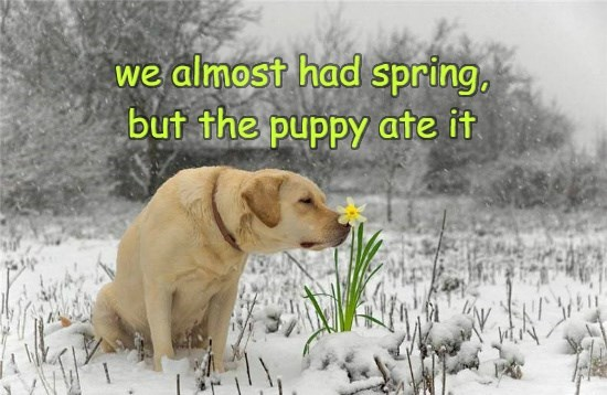 dogs,spring,caption