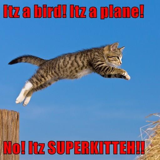 animals cat plane kitty bird caption Super - 8755179520