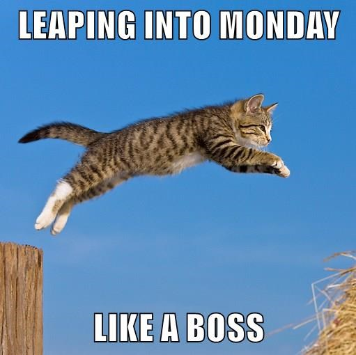 caption,Cats,leap day