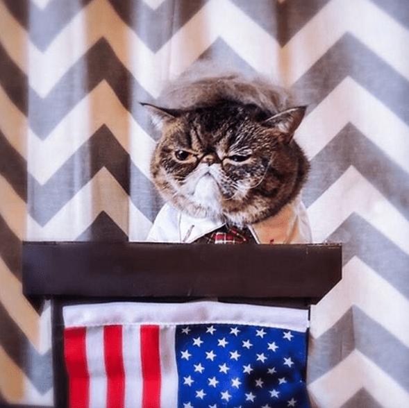 trump - Cat