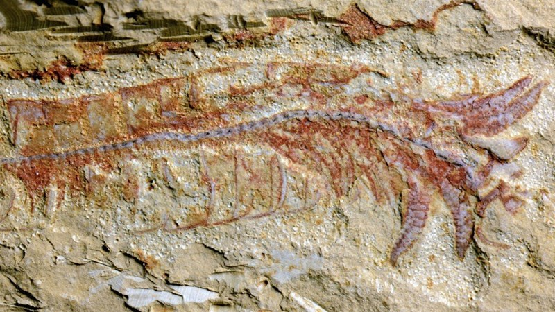 science fossils image Scientists Found a 520 Million-Year-Old Fossil With an Incredibly Well Preserved Nervous System