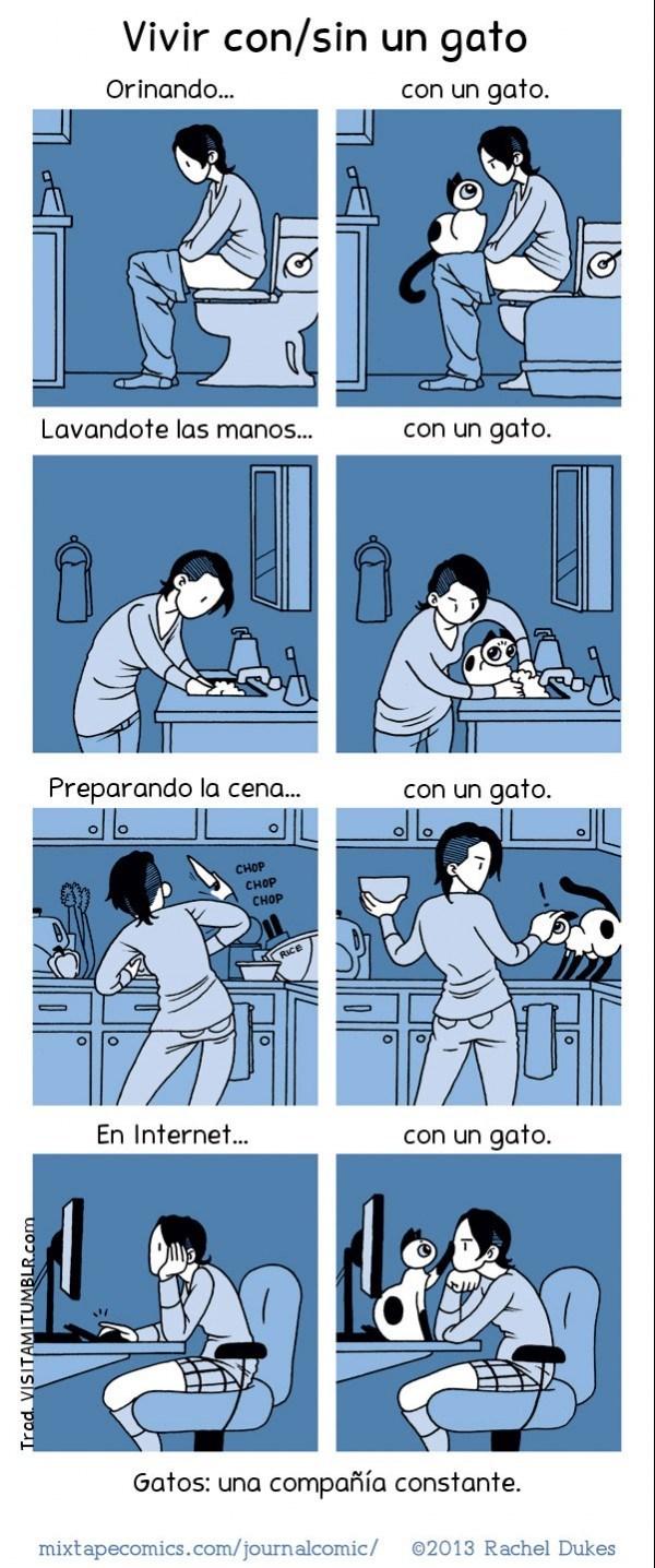 vivir con gatos