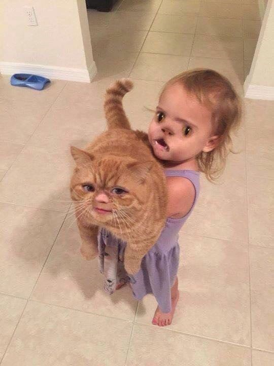 cat baby terrifying face swap