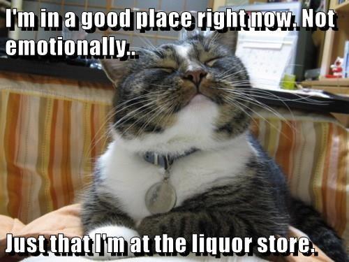 animals cat place good caption liquor store - 8755857920