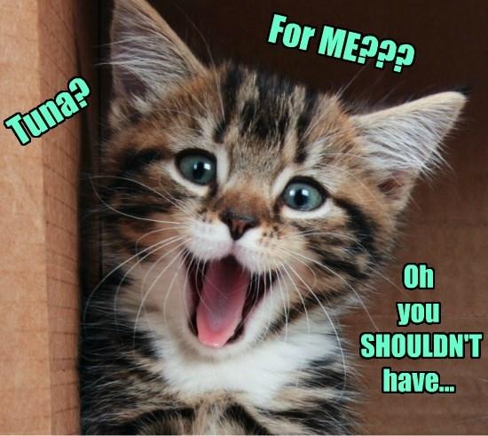 caption Cats - 8755904000