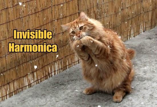 caption Cats - 8755904256