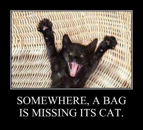 SOMEWHERE, A BAG IS MISSING ITS CAT.