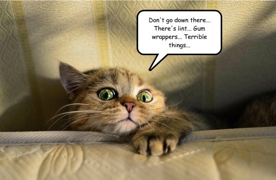 caption Cats - 8755951360