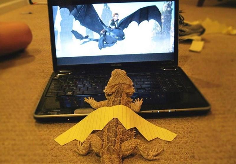 little lizard wants to be dragon