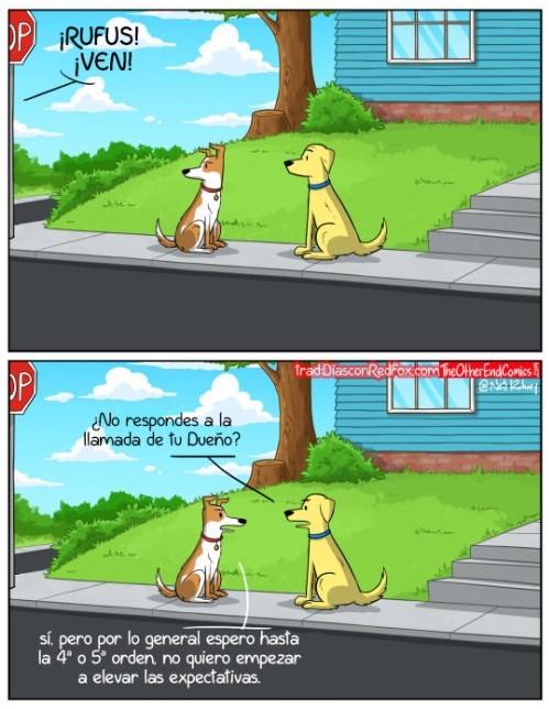 llamando al perro