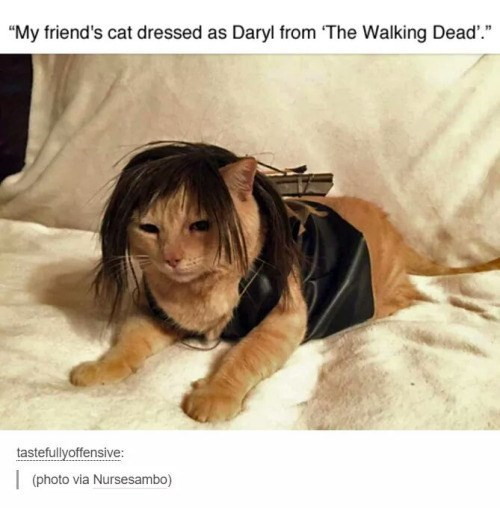 walking dead daryl as a cat