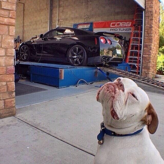 dog is proud of his car