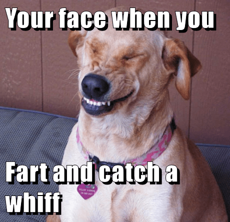 Your Face When You Fart And Catch A Whiff I Has A Hotdog Dog