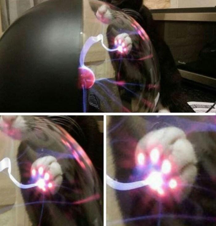 cat touches plasma ball