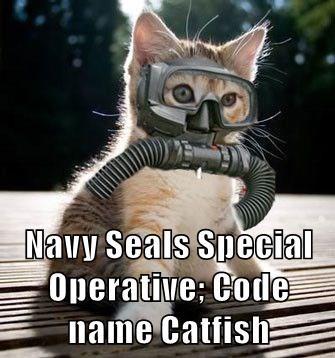 animals caption Cats - 8756204800