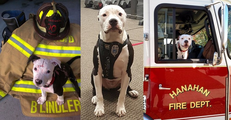 Jake the Fire Dog Grew up to Be a Fire Dept. Mascot With His Own Badge and Everything
