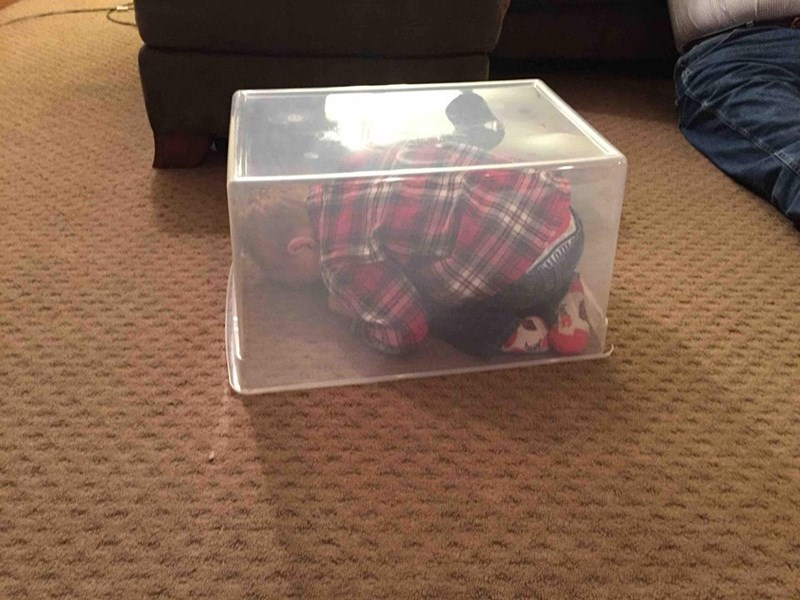 clearly-not-the-hide-seek-champion