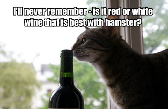 cat wine hamster caption - 8756549376