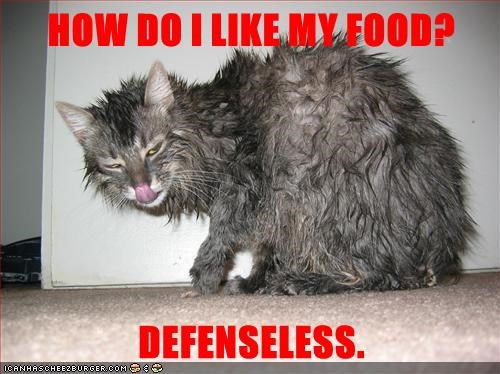 cat,defenseless,food