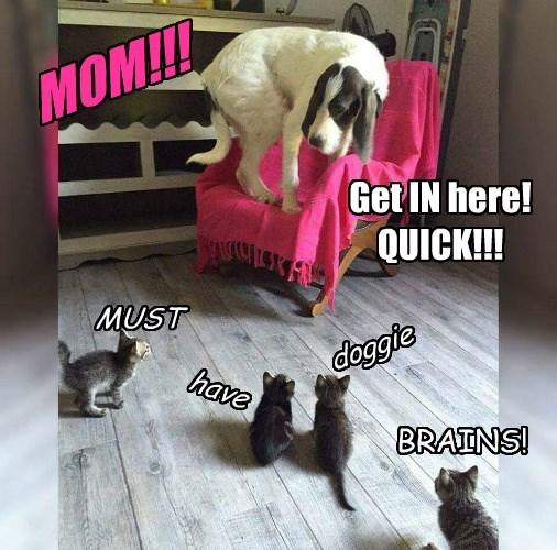 The Feline Apocalypse Has Begun!