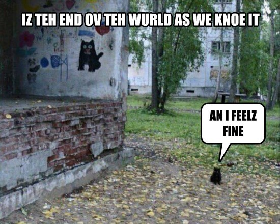 caption Cats - 8756755456