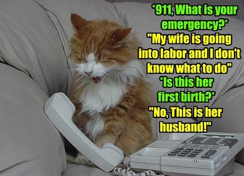 caption Cats - 8756788992