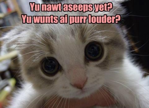 caption Cats - 8756859648