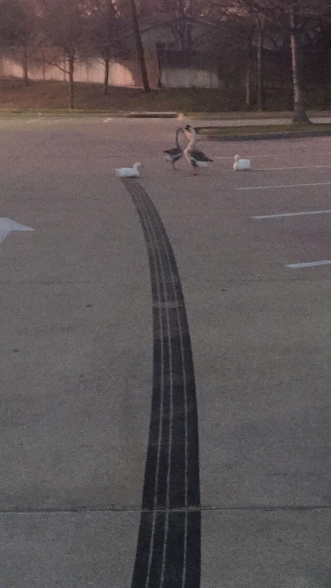 duck landing tire treads