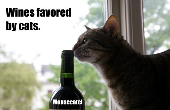 wine caption Cats - 8756993024