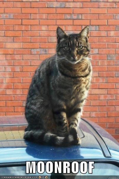 animals caption Cats - 8757011200