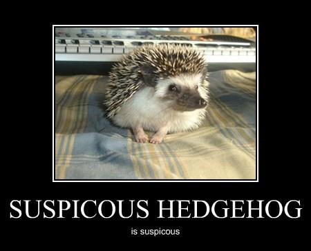 SUSPICOUS HEDGEHOG