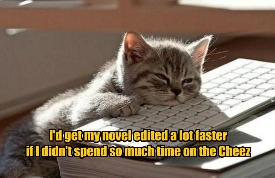 caption Cats - 8757166080