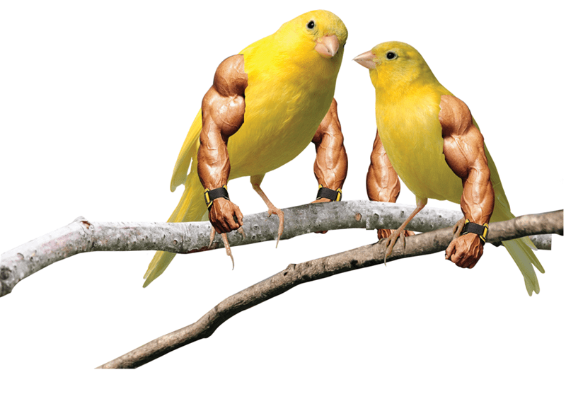 birds with arms - Bird