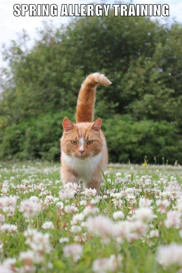 animals caption Cats - 8757299200