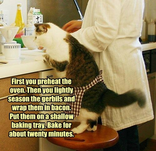 cat recipes betty crocker caption - 8757379328
