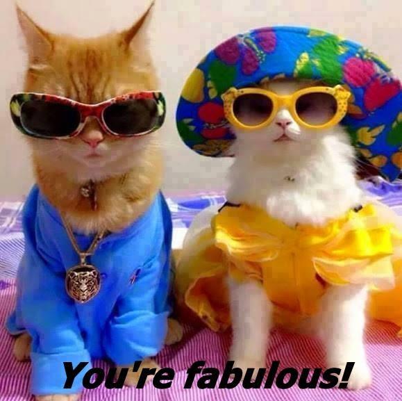 animals caption Cats - 8757388544